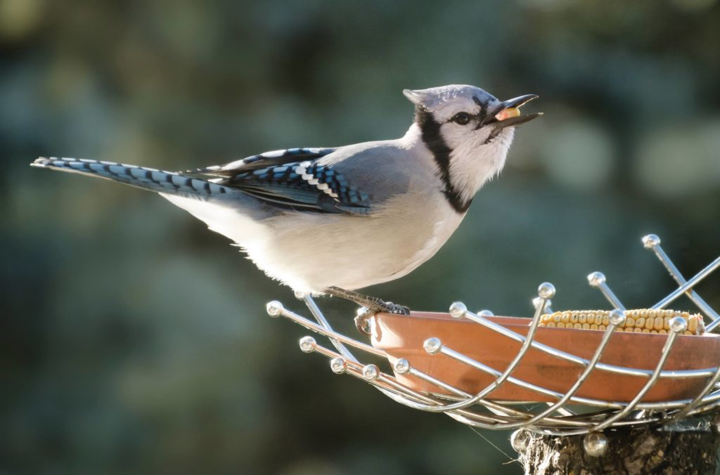 Returning Birds: Tips to Help Our Feathered Friends